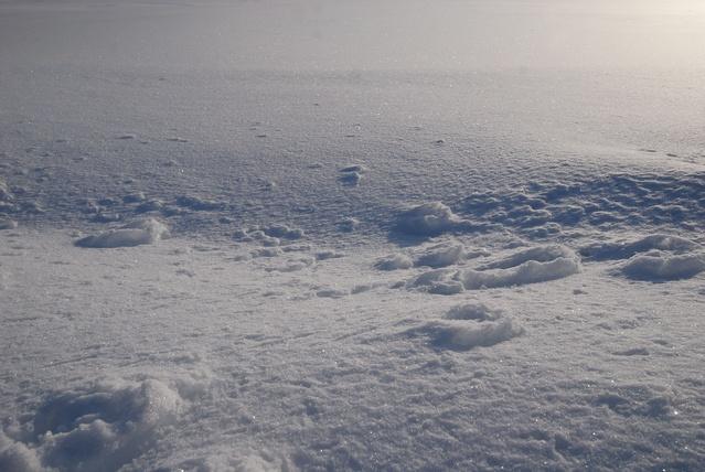 雪質の違い